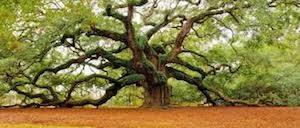 arbre généalogique et génésociogramme
