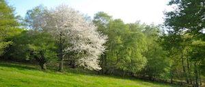 arbre supery genosociogramme